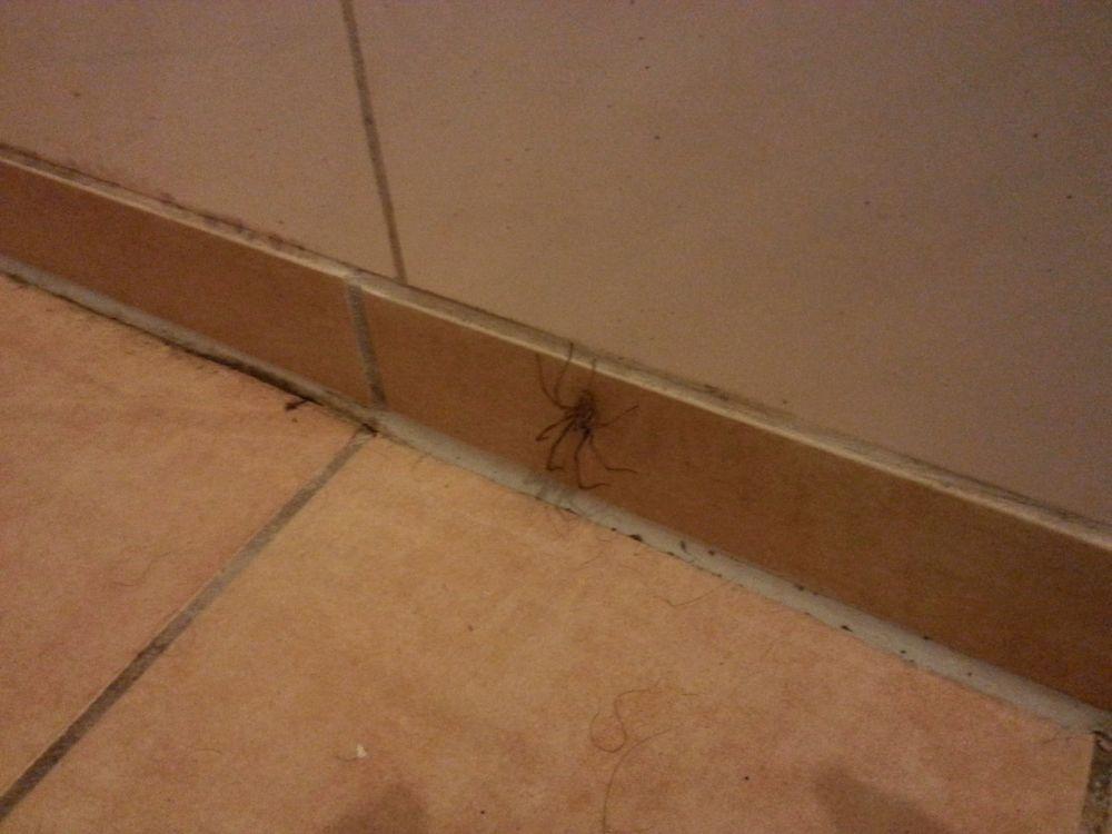 2015-09-08 22.02.22-big spider